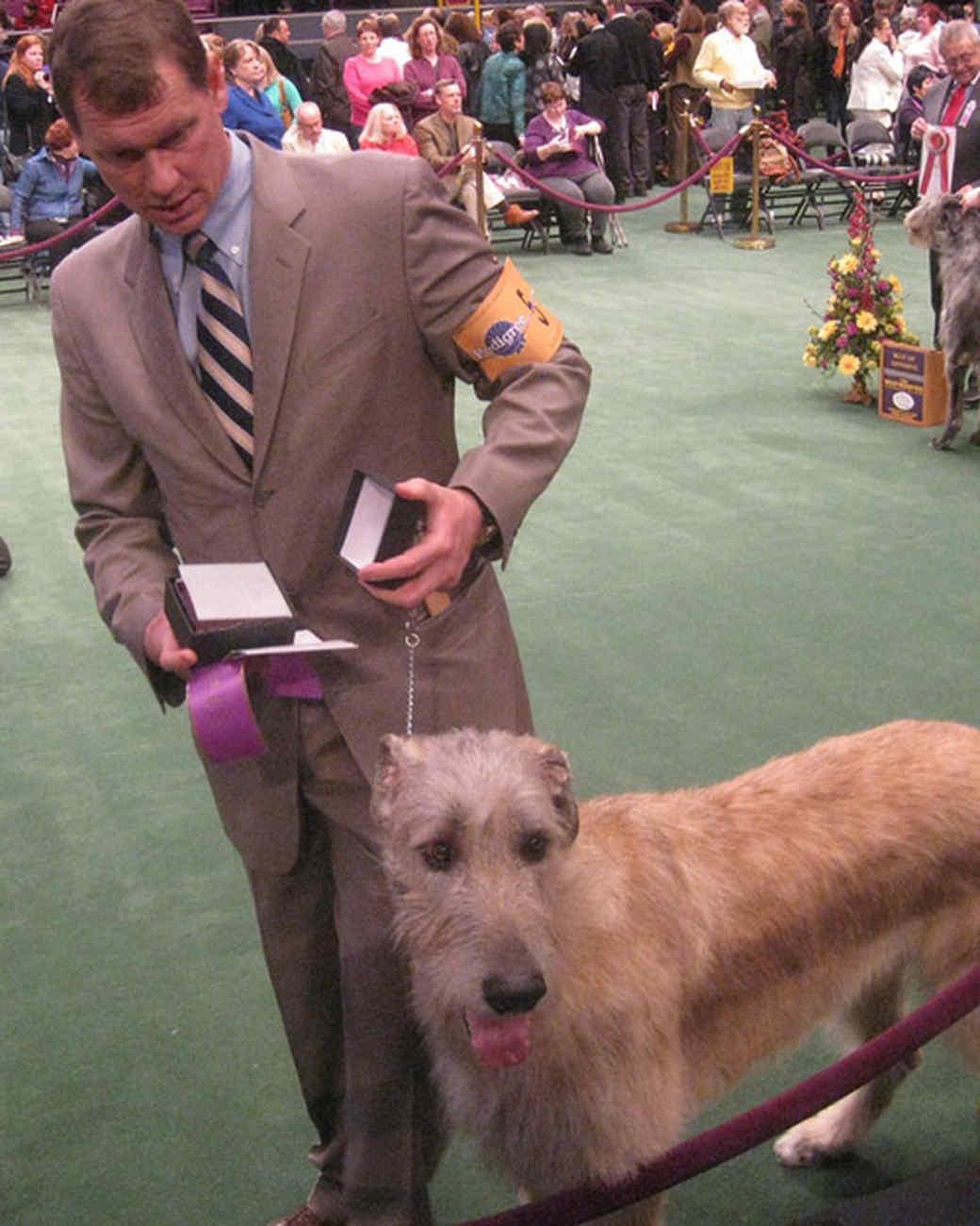 r_0309_scottish_deerhound_awards.jpg