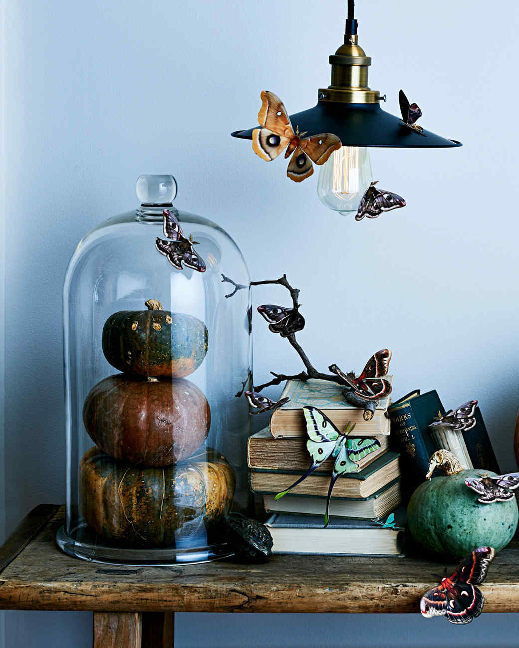 moths and pumpkins displayed on antique books
