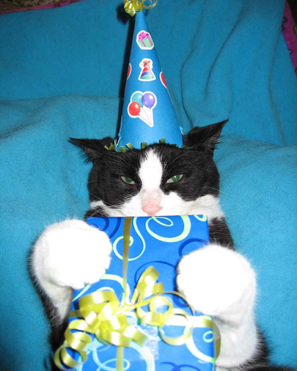 party_animals_photo_contest_84413.jpg