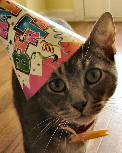 party_animals_photo_contest_87616.jpg