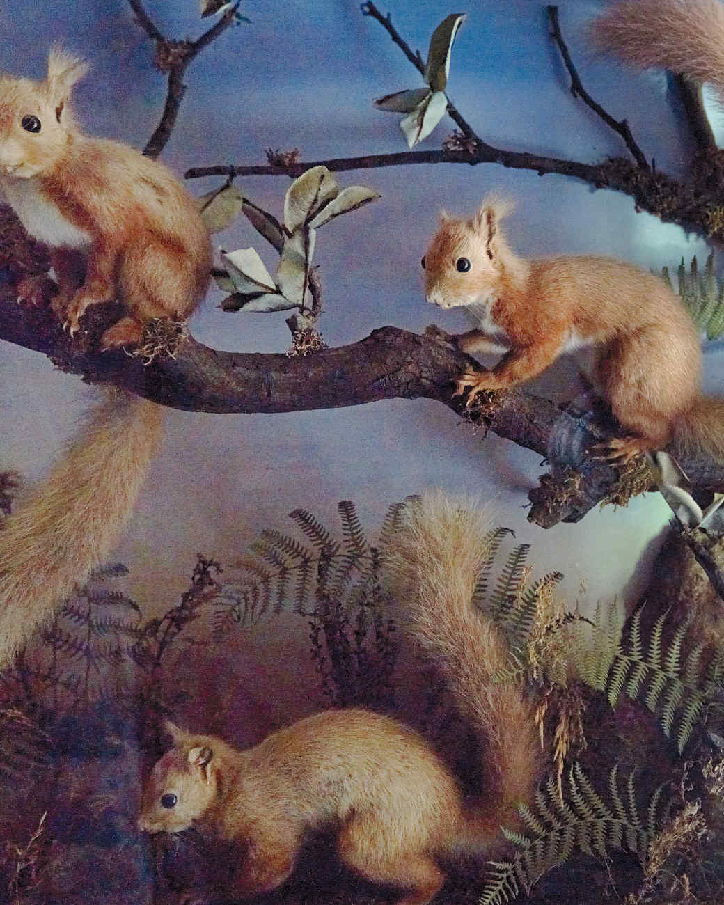 squirrels-taxidermy-1011mld106418.jpg