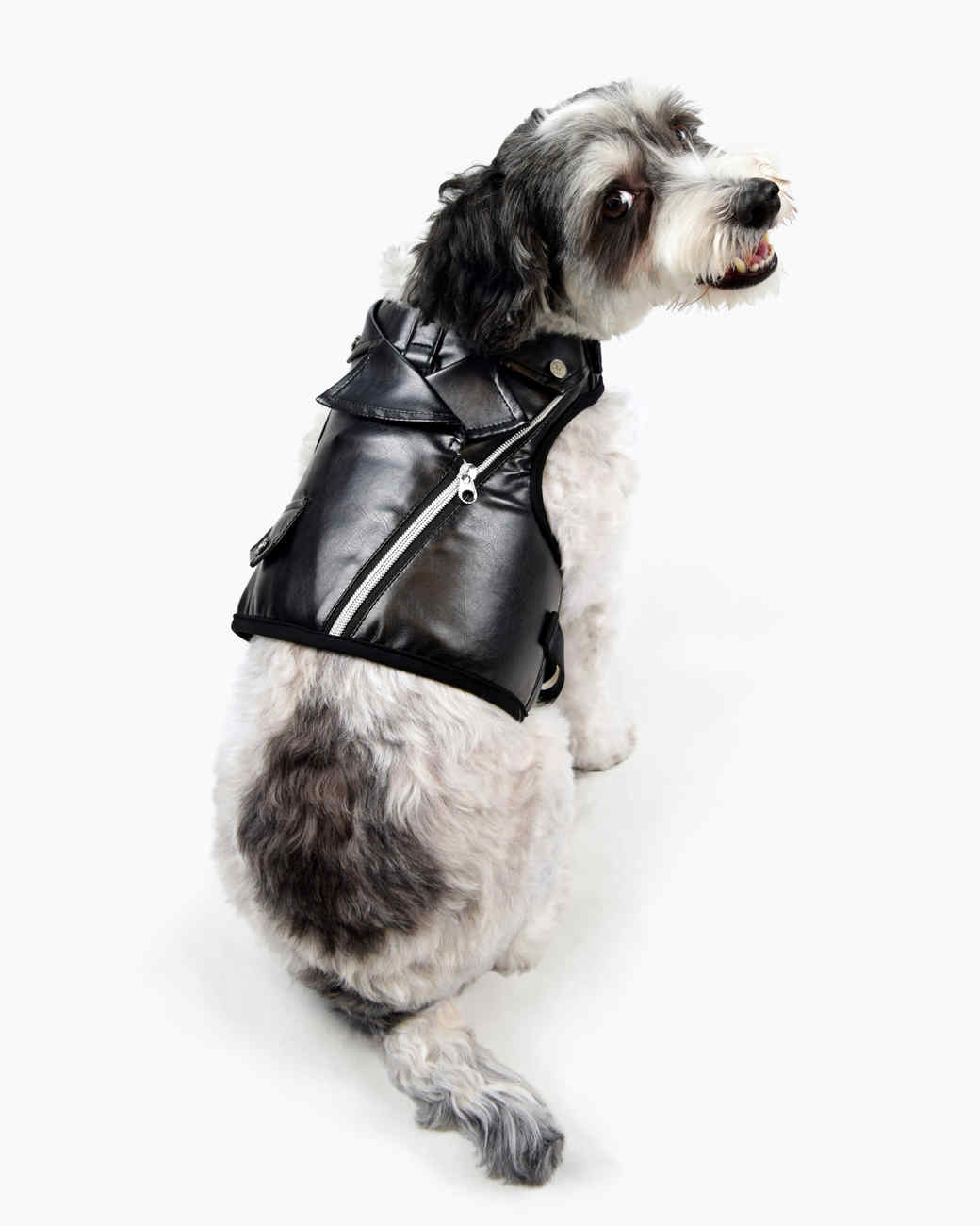 amazon pets moto jacket dog merch