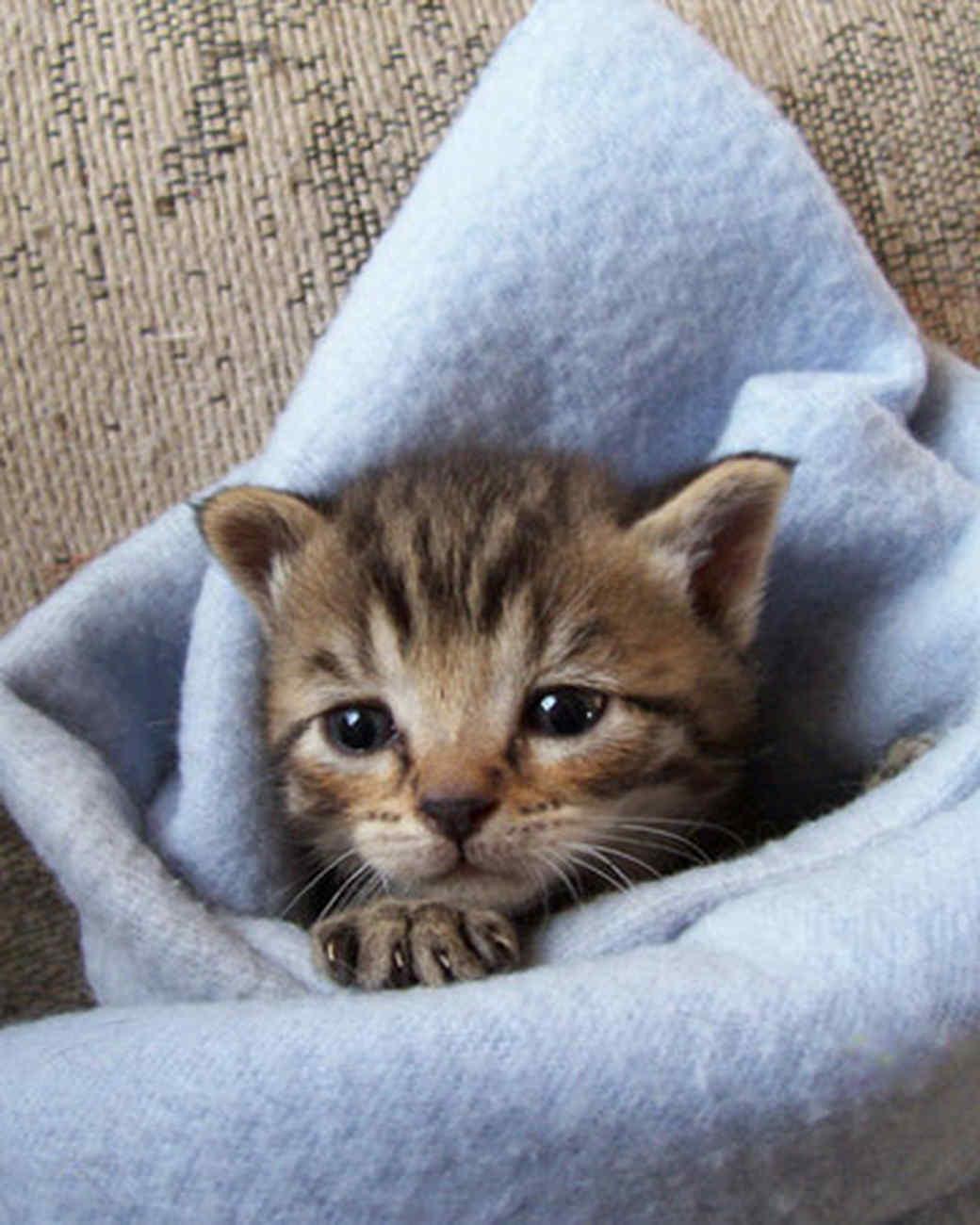 pets_kittens_0610_9485857_12062337.jpg