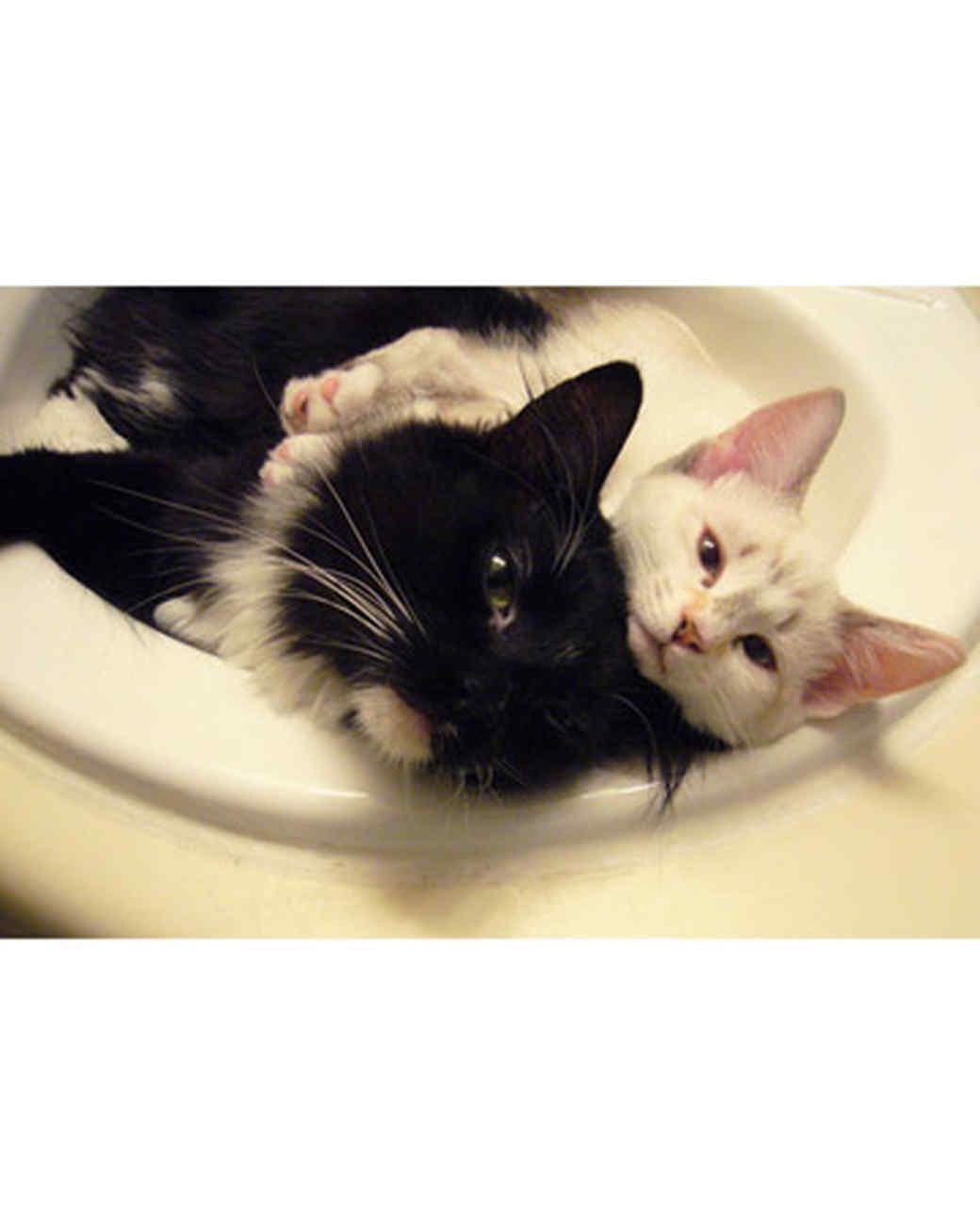 pets_kittens_0610_9500786_23531505.jpg