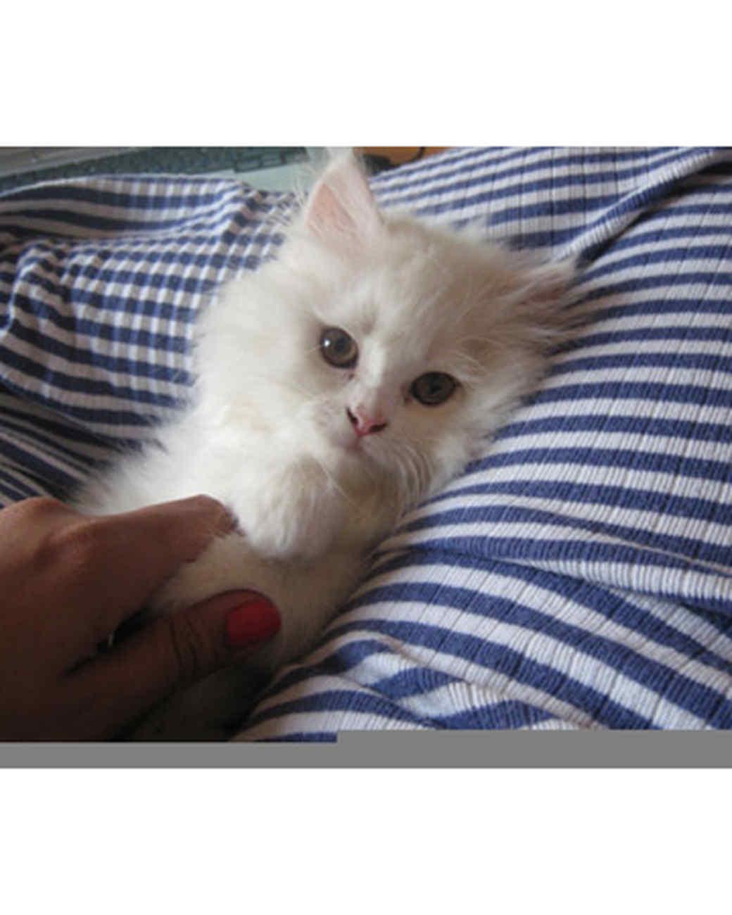 pets_kittens_0610_9534658_23595946.jpg