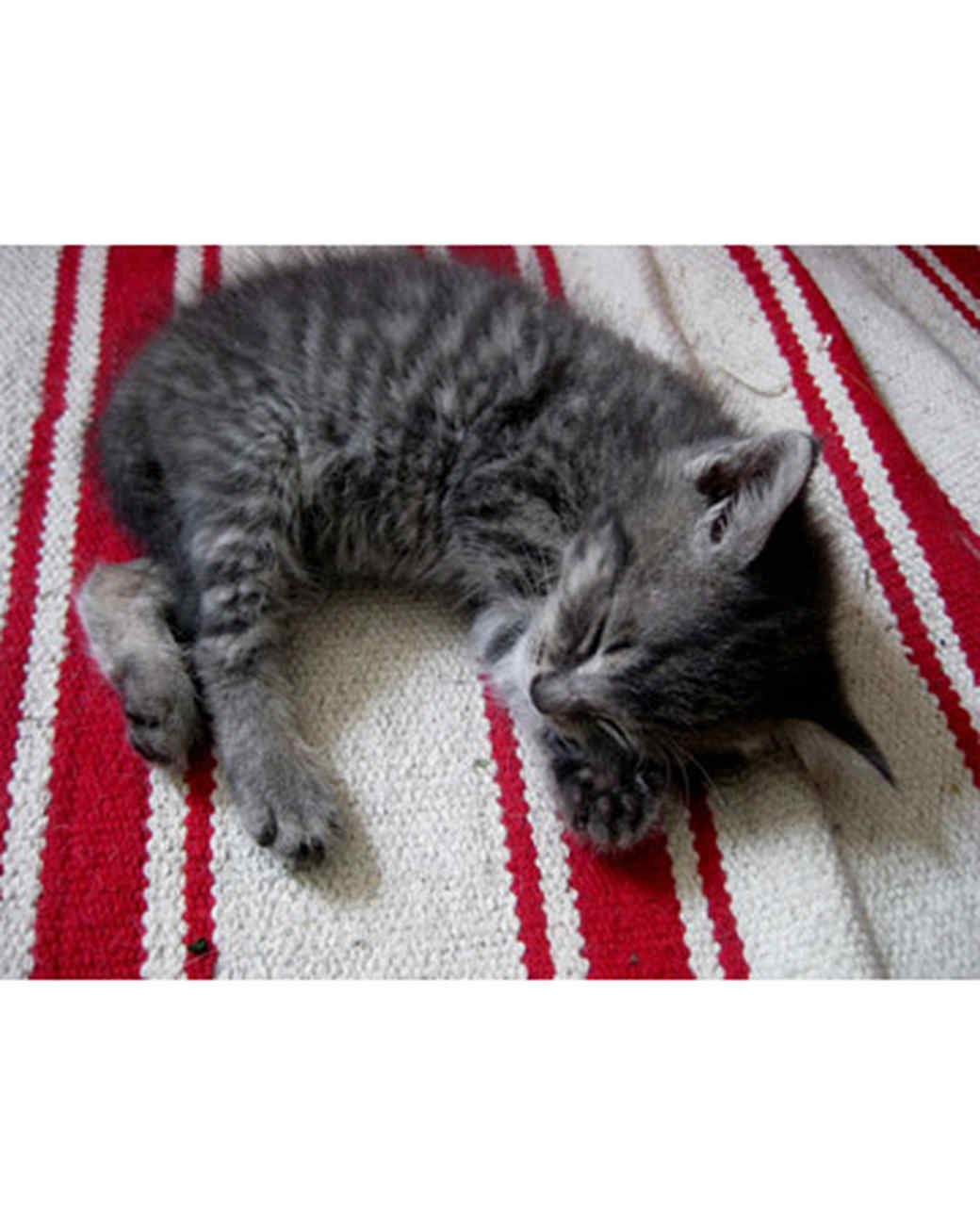pets_kittens_0610_9537159_10998021.jpg