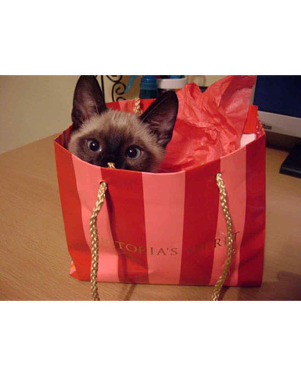 pets_kittens_0610_9539098_23605221.jpg