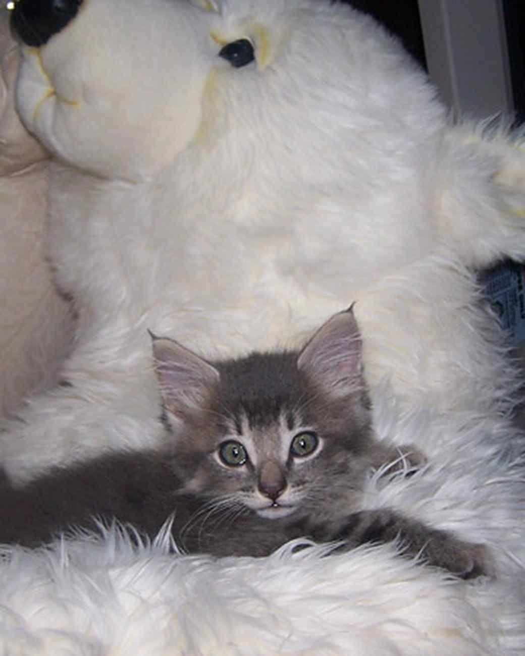 pets_kittens_0610_9552021_23499846.jpg
