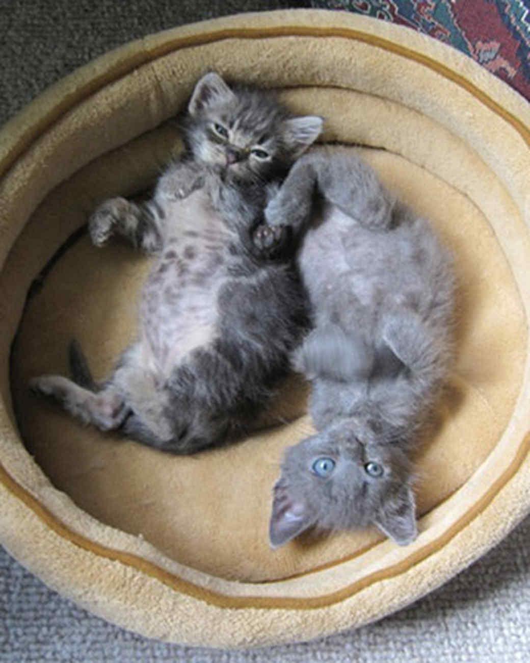 pets_kittens_0610_9552289_19342078.jpg