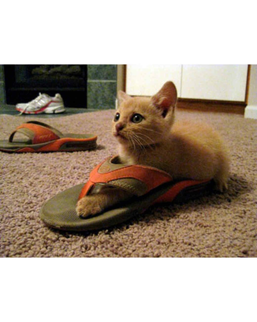pets_kittens_0610_9612673_23718641.jpg