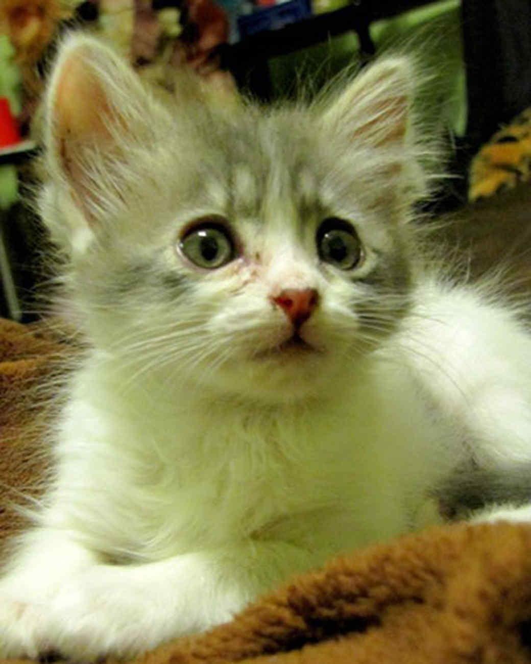 pets_kittens_0610_9618951_23754049.jpg
