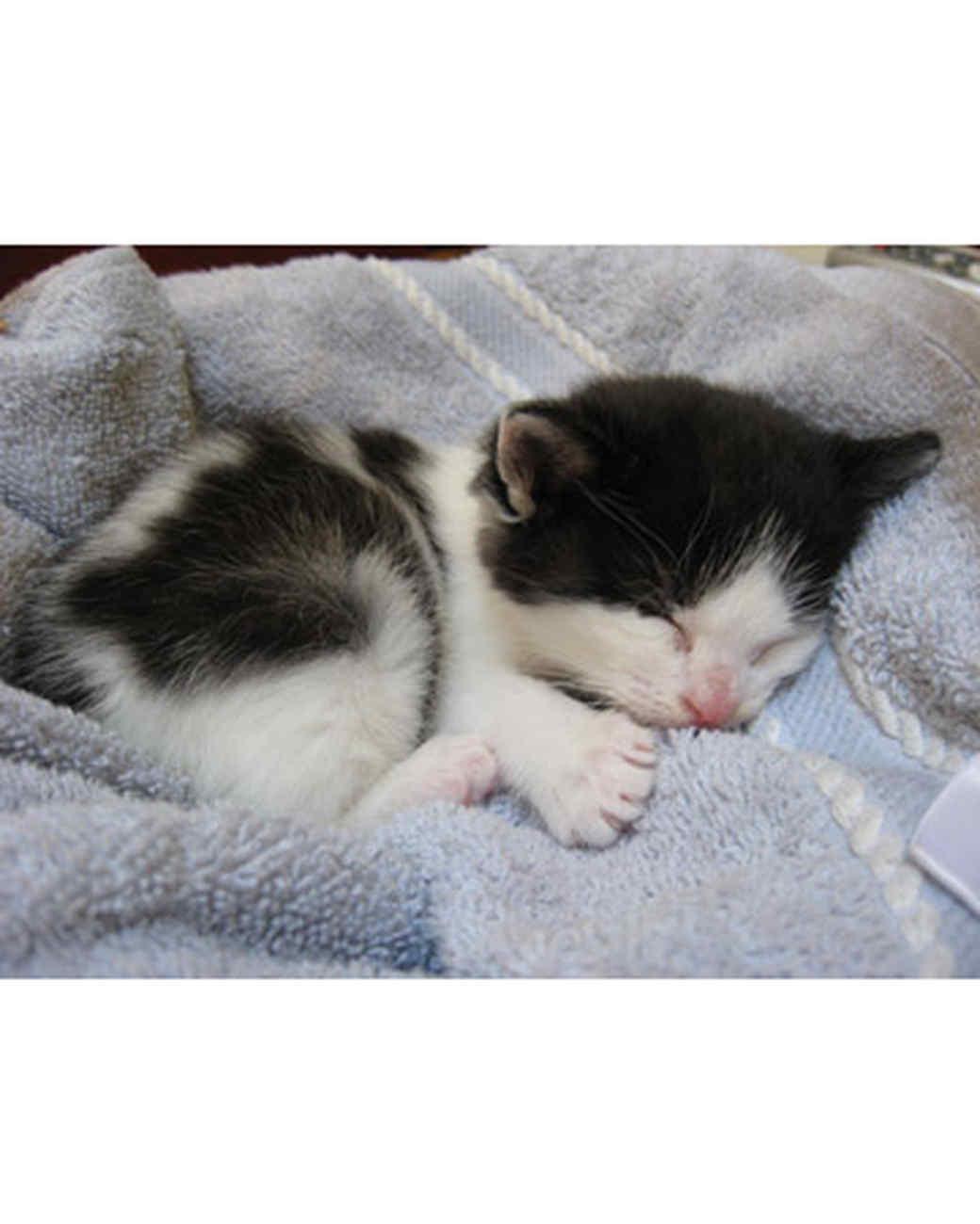 pets_kittens_0610_9665690_23838174.jpg