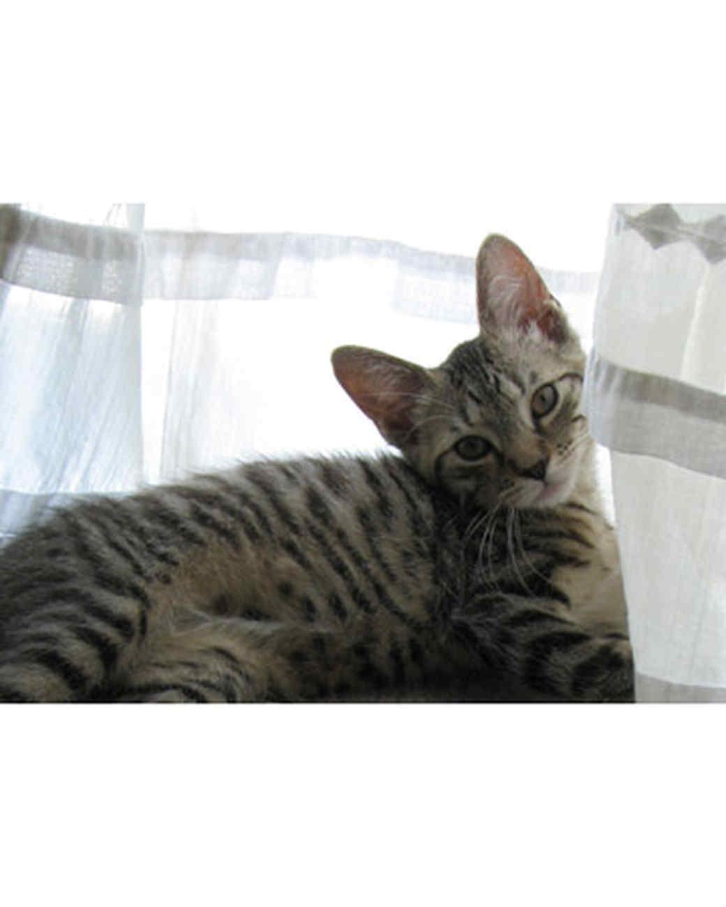 pets_kittens_0610_9673846_11063019.jpg
