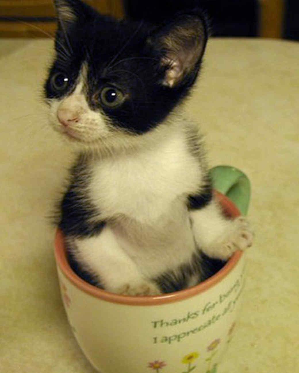 pets_kittens_0610_9675119_23856177.jpg