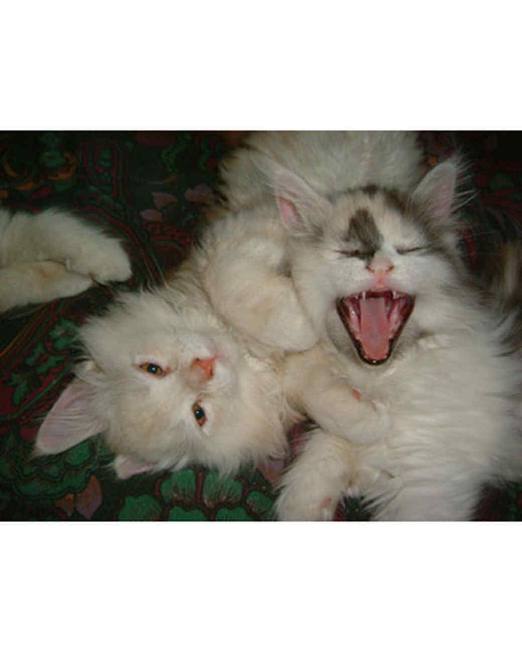 pets_kittens_0610_9678279_11018203.jpg