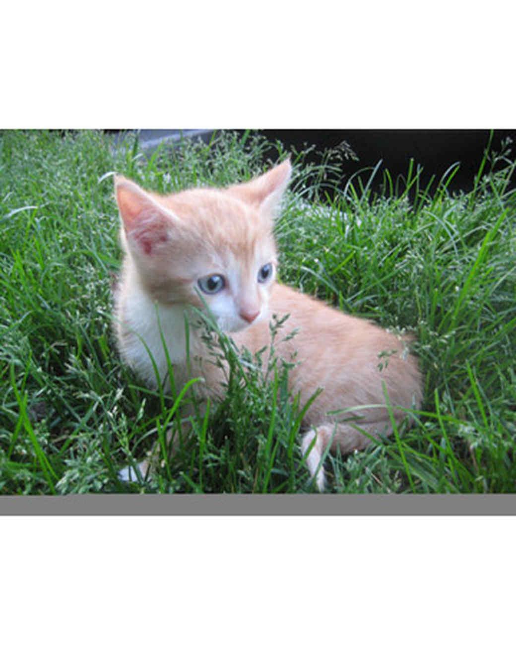 pets_kittens_0610_9681286_23853238.jpg