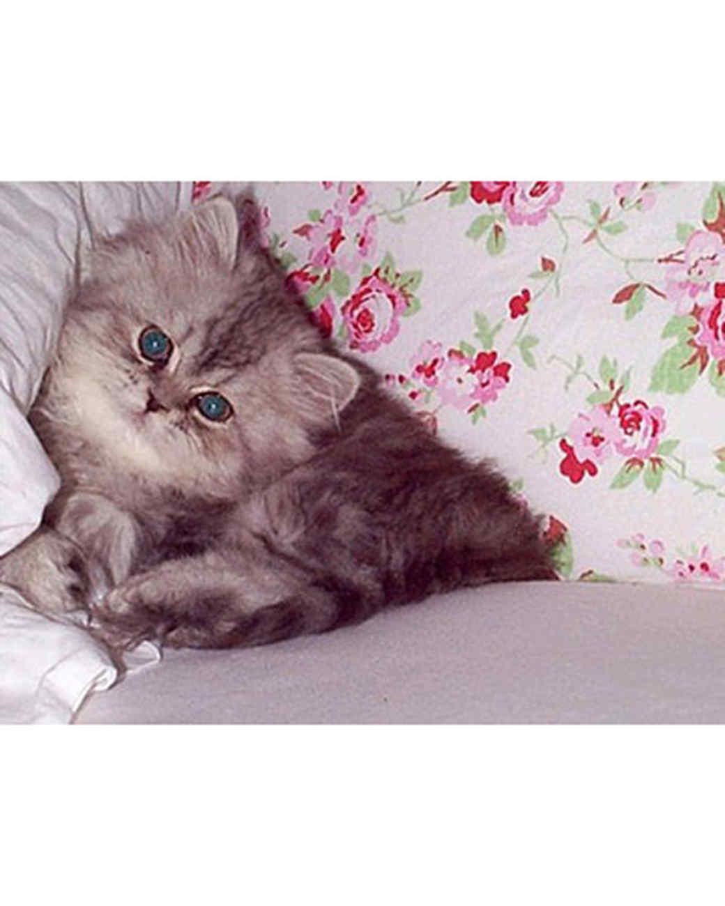 pets_kittens_0710_9551248_22122906.jpg
