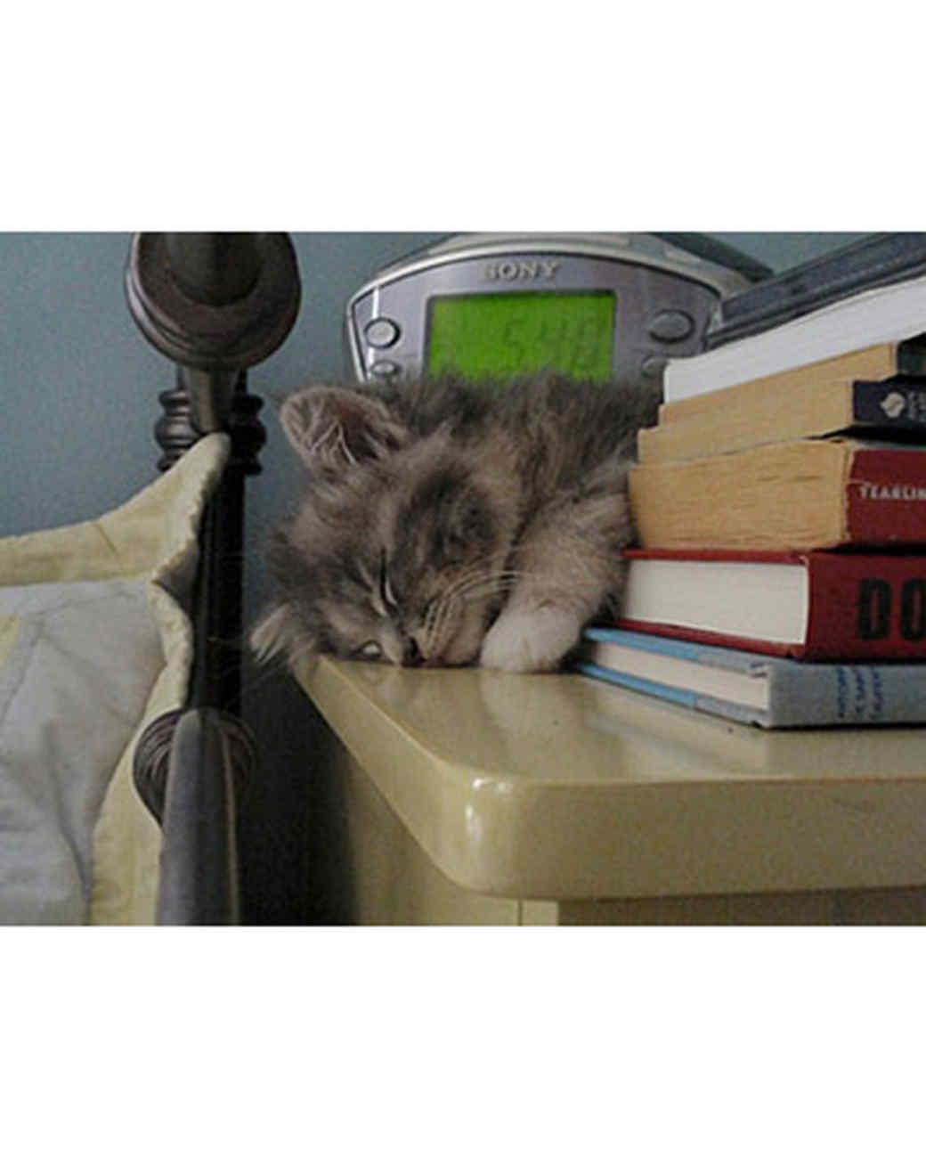 pets_kittens_0710_9733648_10941691.jpg