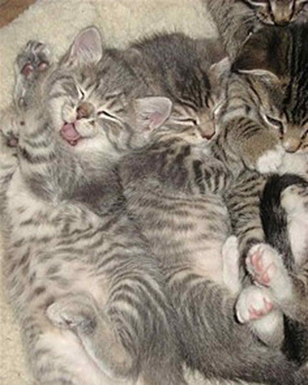 pets_kittens_0710_9738932_18738685.jpg
