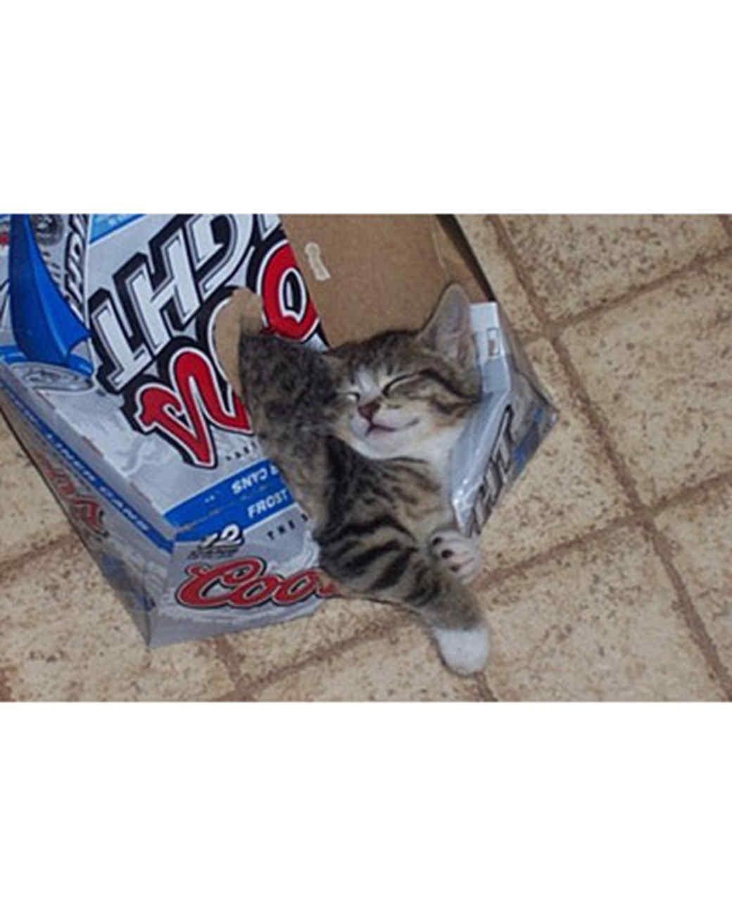 pets_kittens_0710_9739426_23636382.jpg