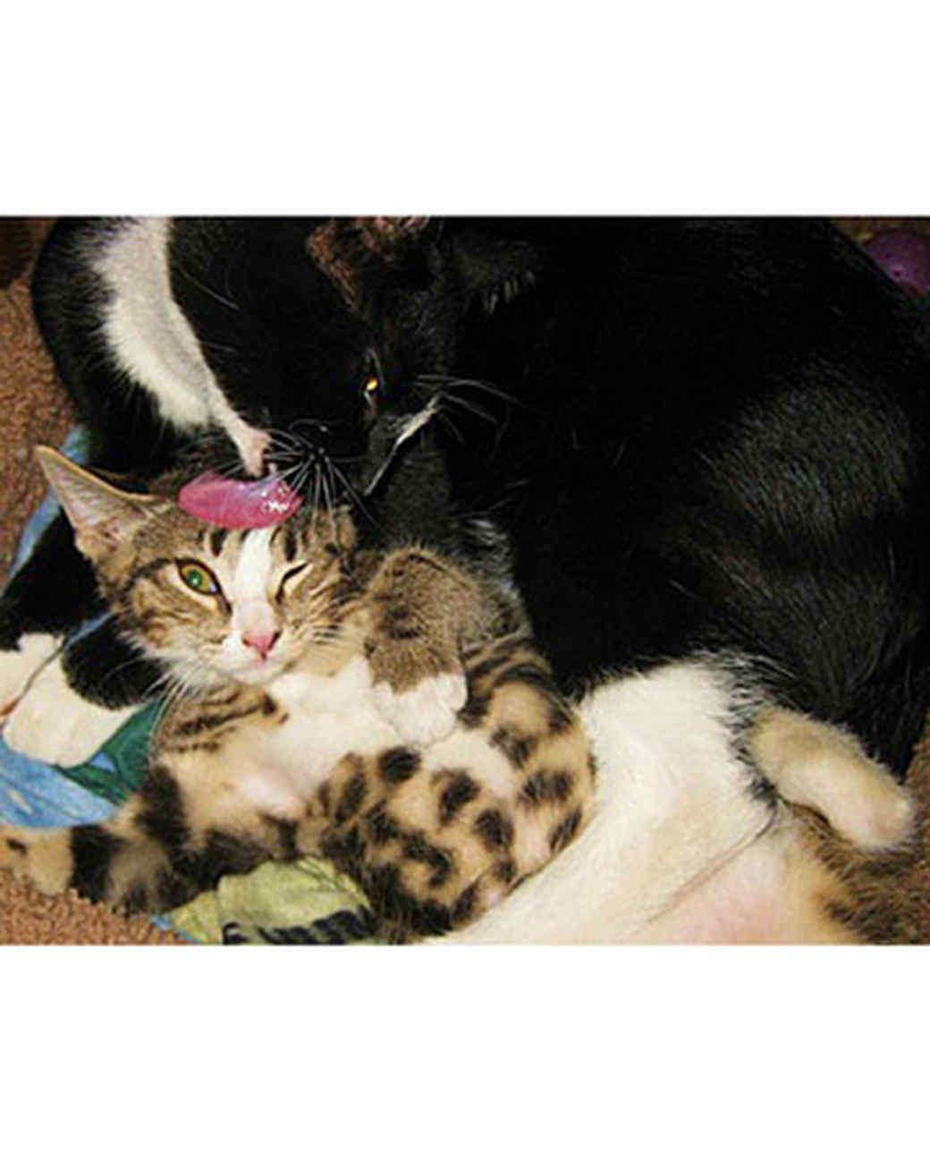 pets_kittens_0710_9773155_24025738.jpg