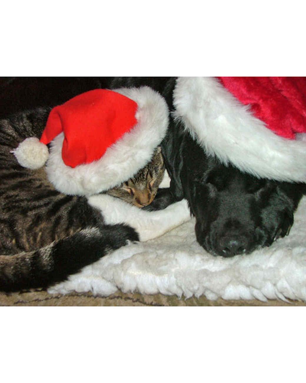 pets_santa09_6718445_11866409_main.jpg