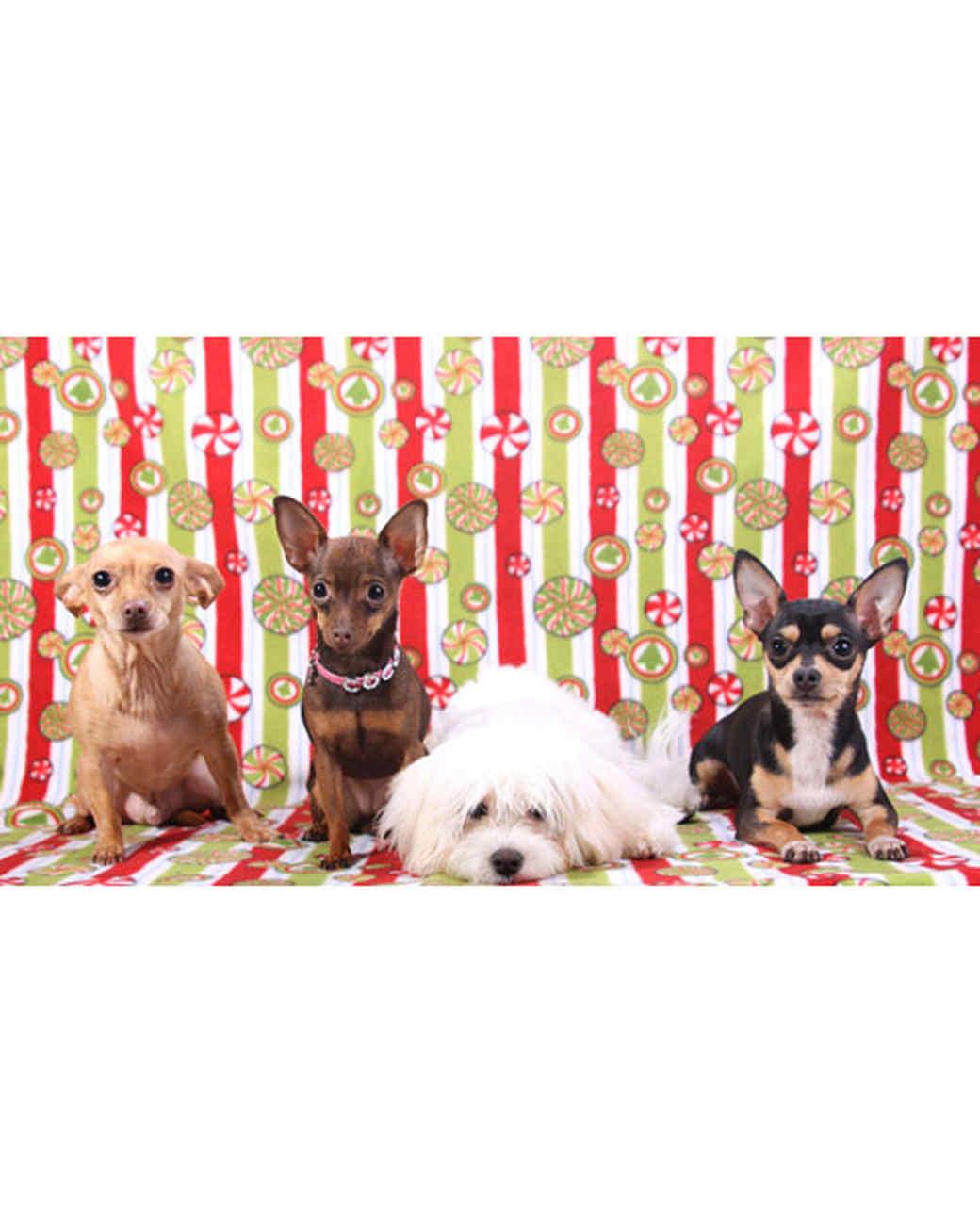 pets_santa09_6749262_10792398_main.jpg