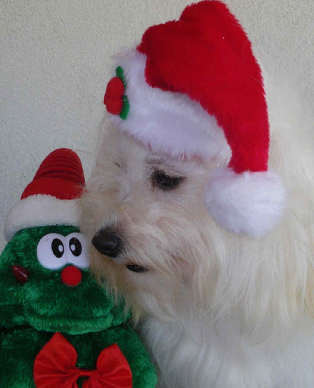 pets_santa09_6833909_14127850_main.jpg