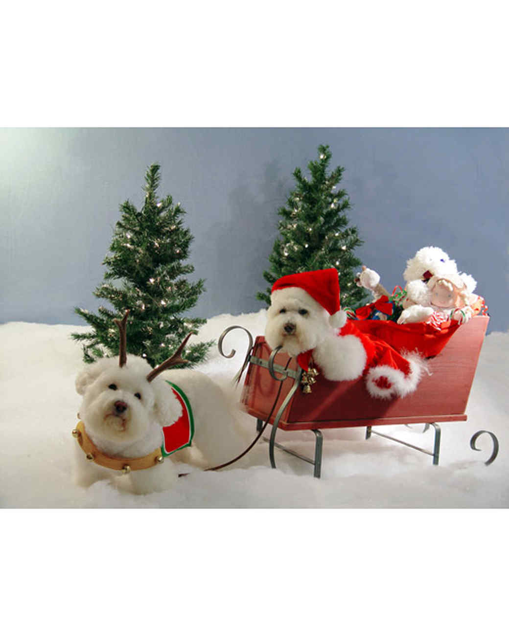 pets_santa09_6963252_18772096_main.jpg