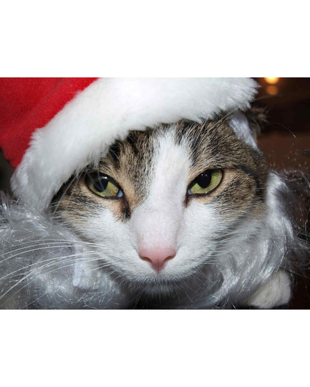 pets_santa09_6988120_11431221_main.jpg