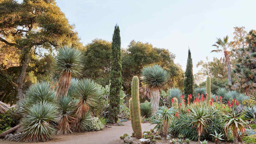 arboretum plant garden