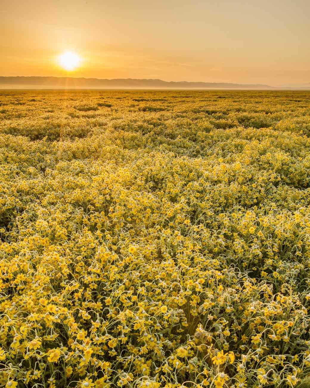 Carrizo Plain National Monument in California
