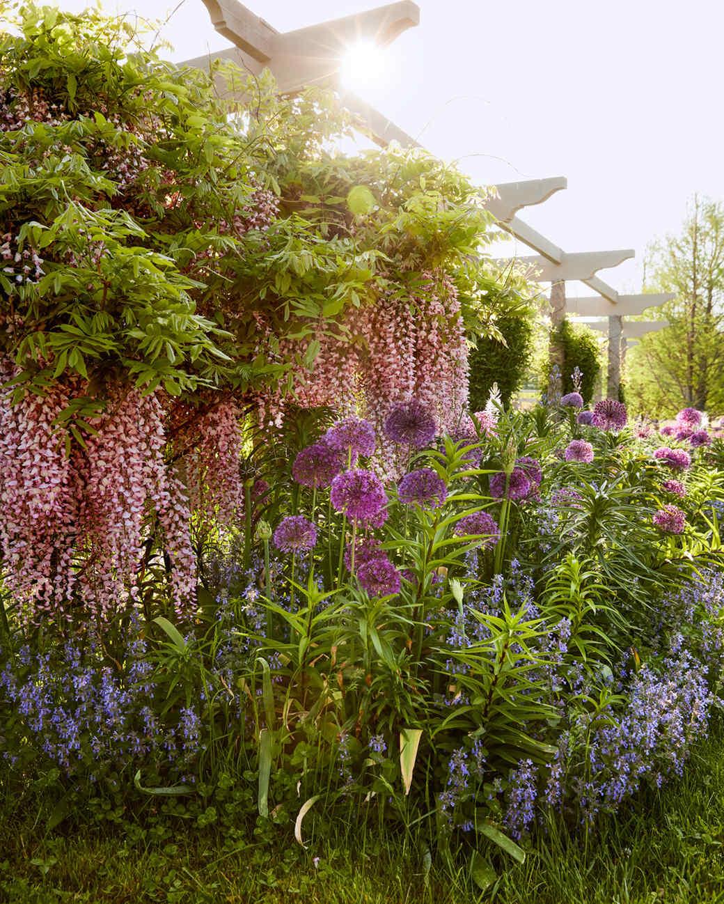 wisteria, allium, magenta, and Camassia flowers