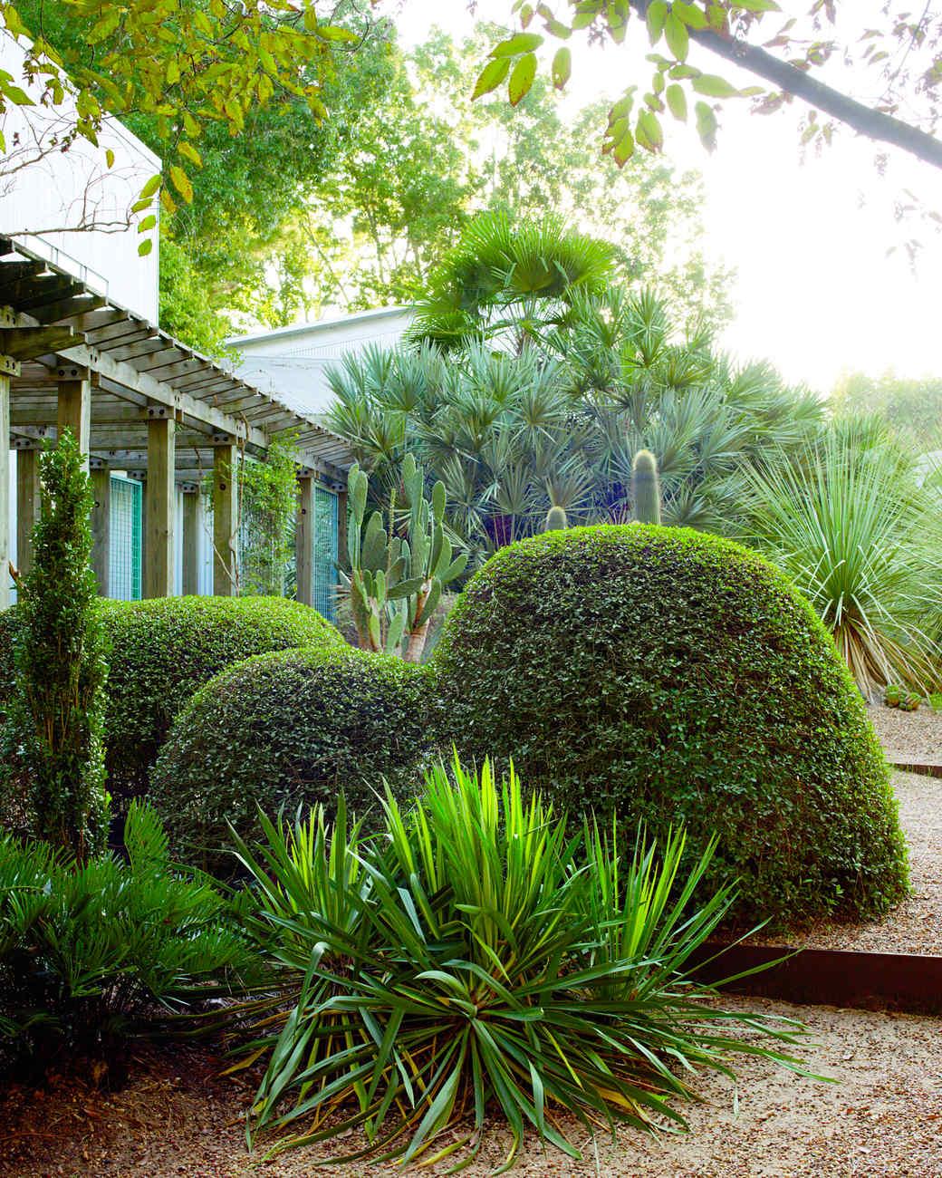 peckerwood-texas-pistachio-ms107897.jpg