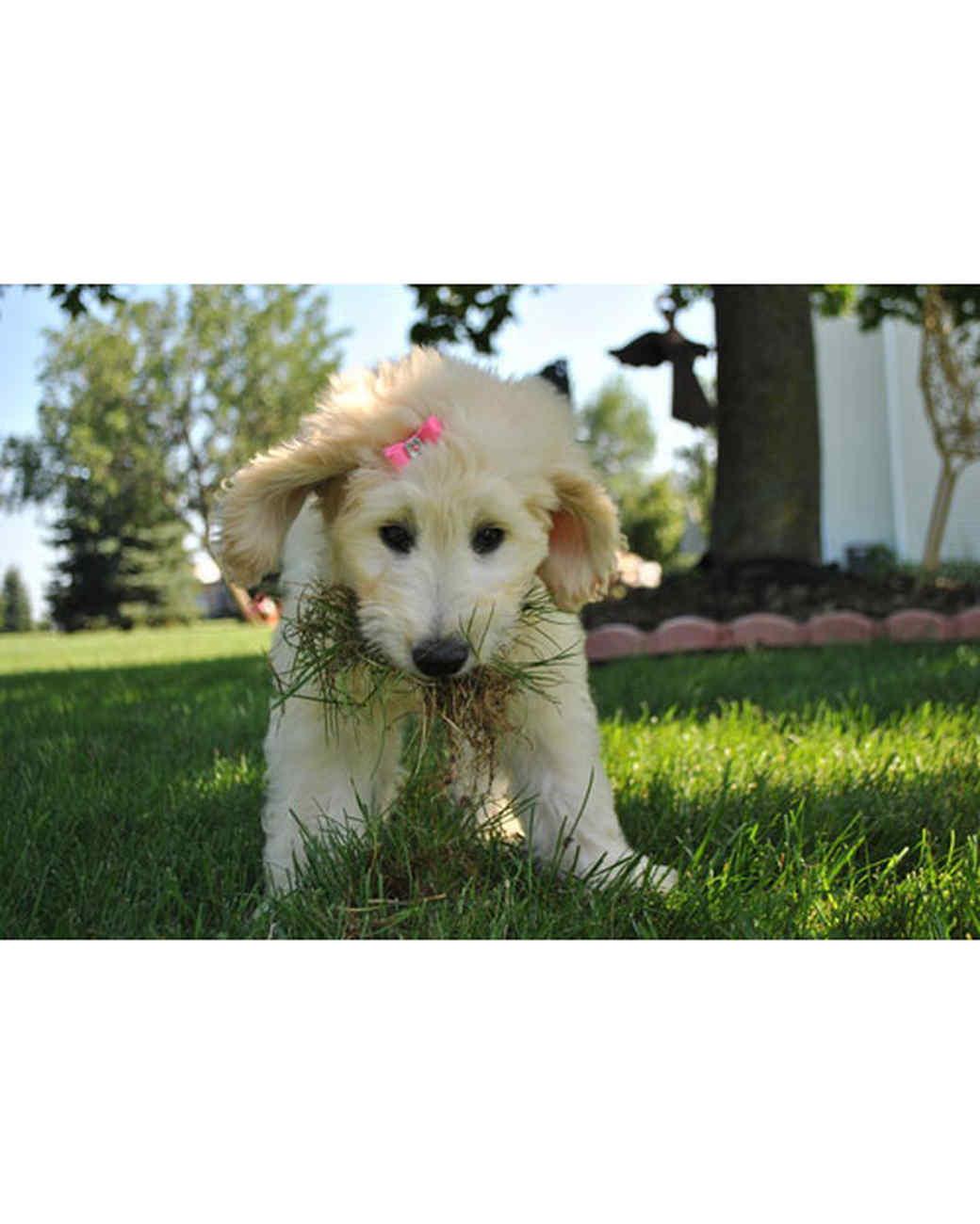 pets-at-play-0311-12971557_30641074.jpg