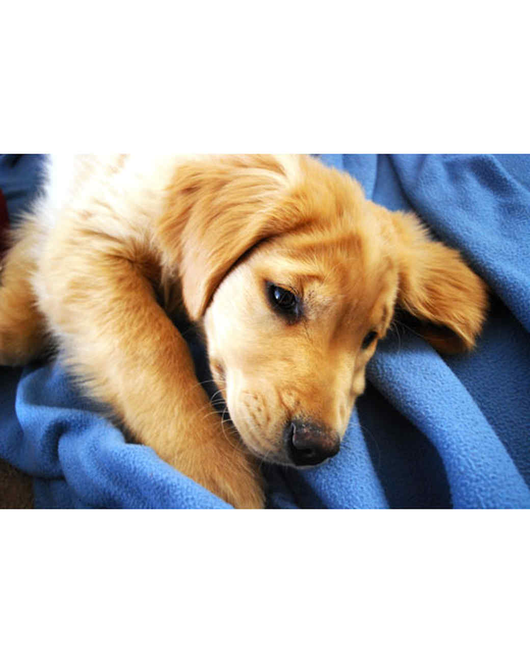 pets-at-play-0311-12980350_30657810.jpg