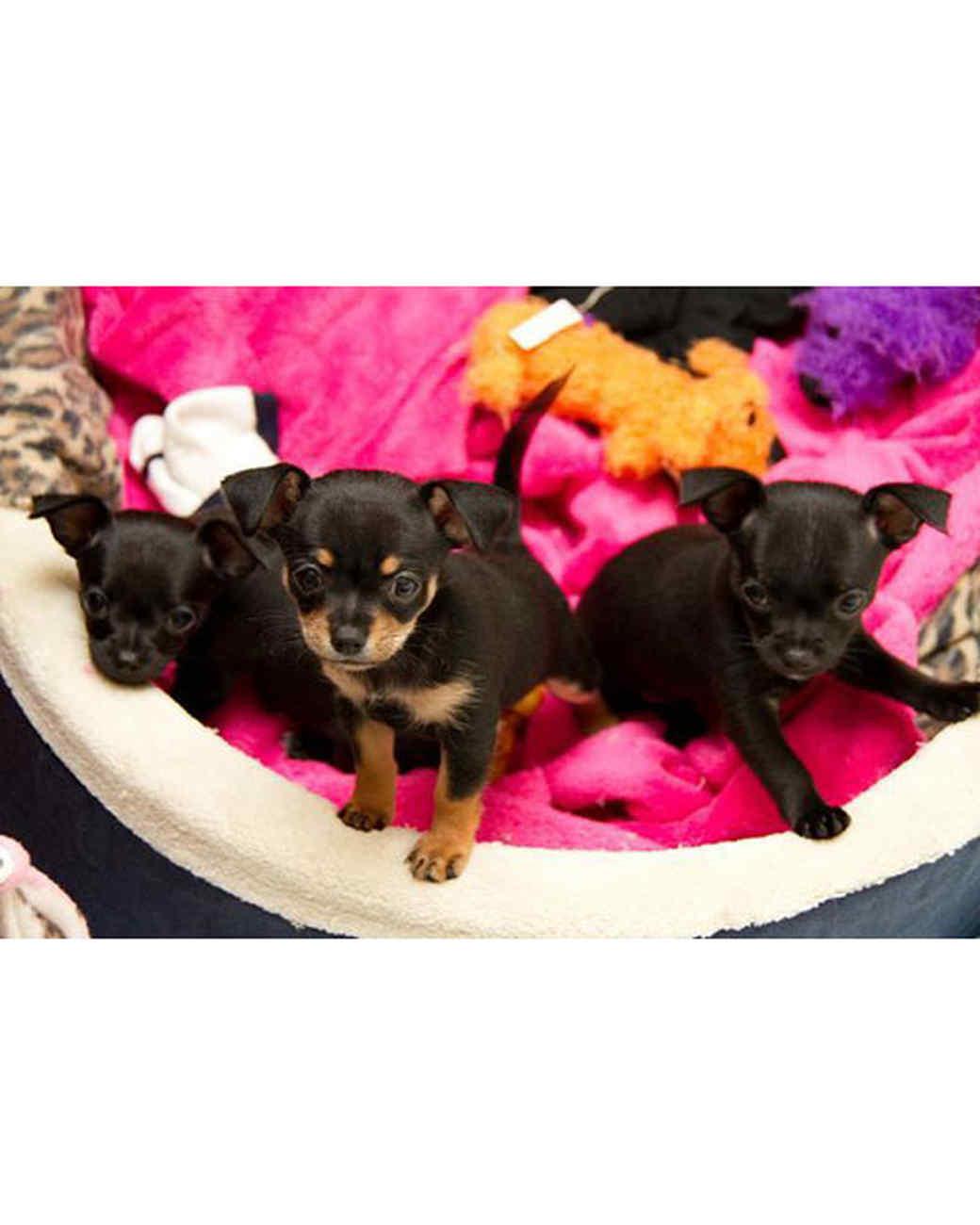 pets-at-play-0311-13009499_30701067.jpg