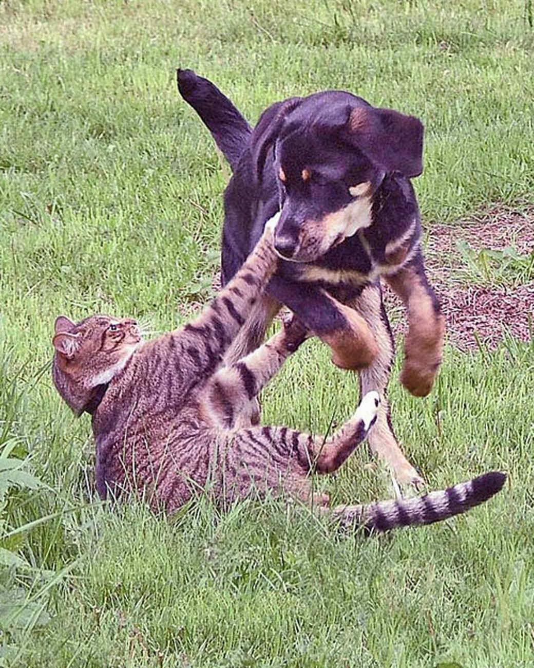 pets-at-play-0311-13079326_12432303.jpg