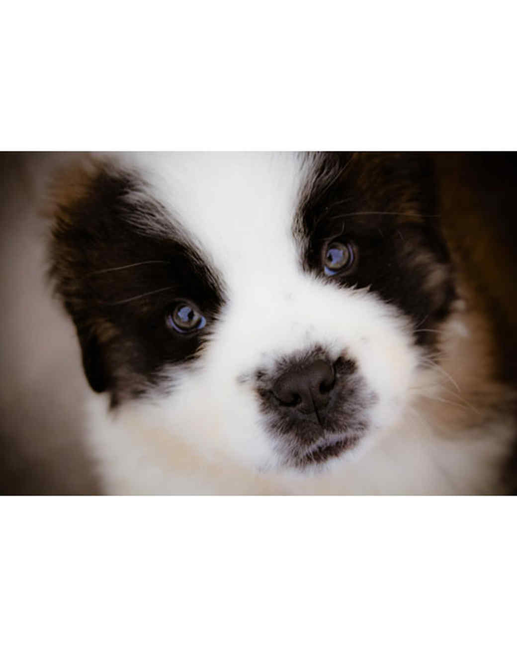 pets-at-play-0311-13115600_30865635.jpg