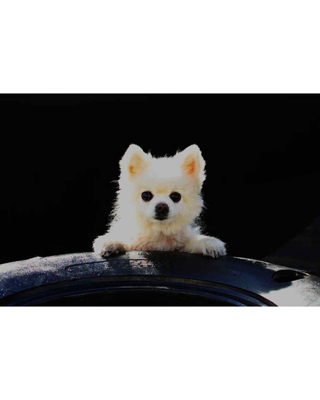 pets-at-play-0311-13122982_26478336.jpg