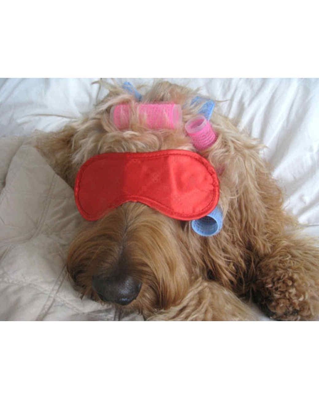 pets-at-play-0311-13130542_30897941.jpg