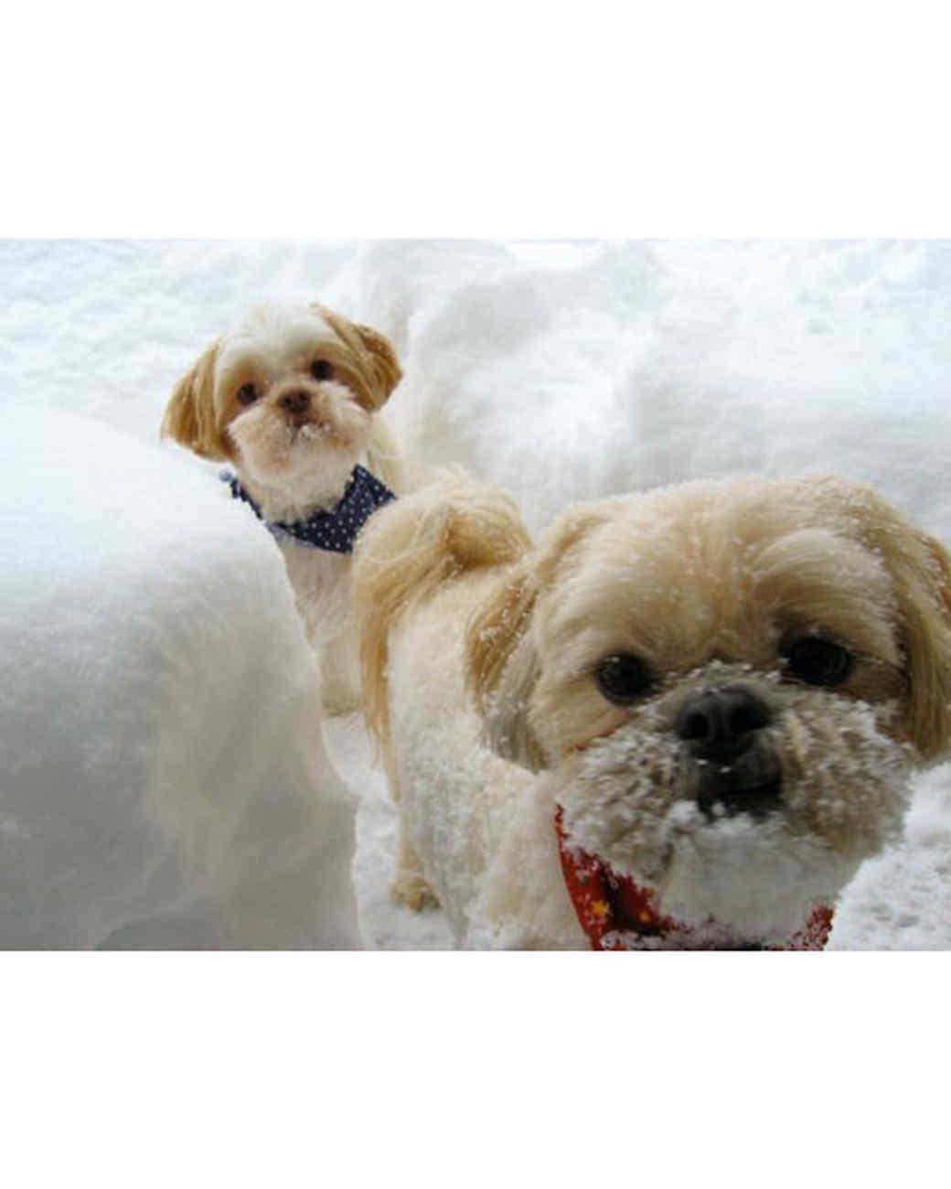 pets-at-play-0311-13170313_11055471.jpg