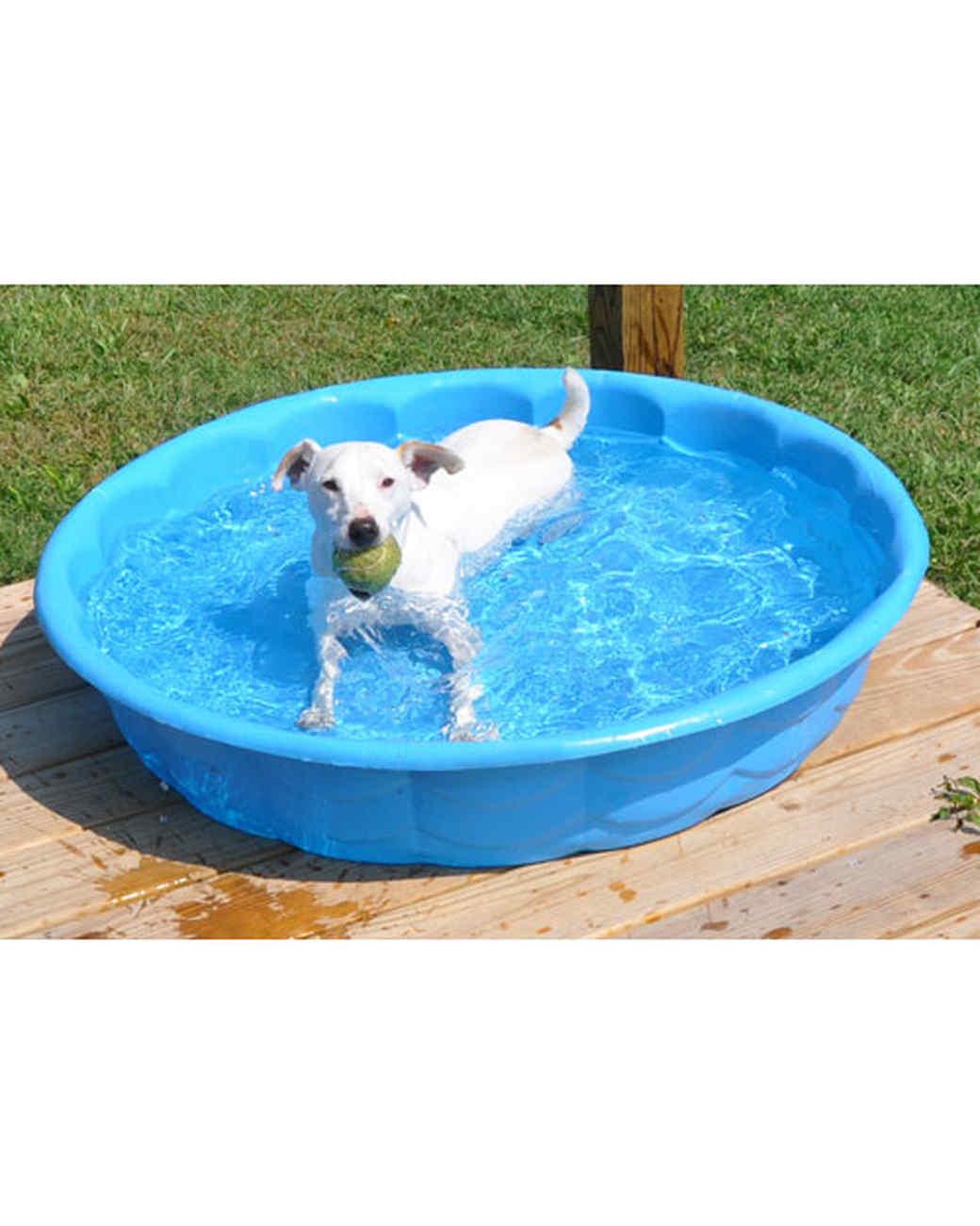 pets-at-play-0311-13178798_16621526.jpg