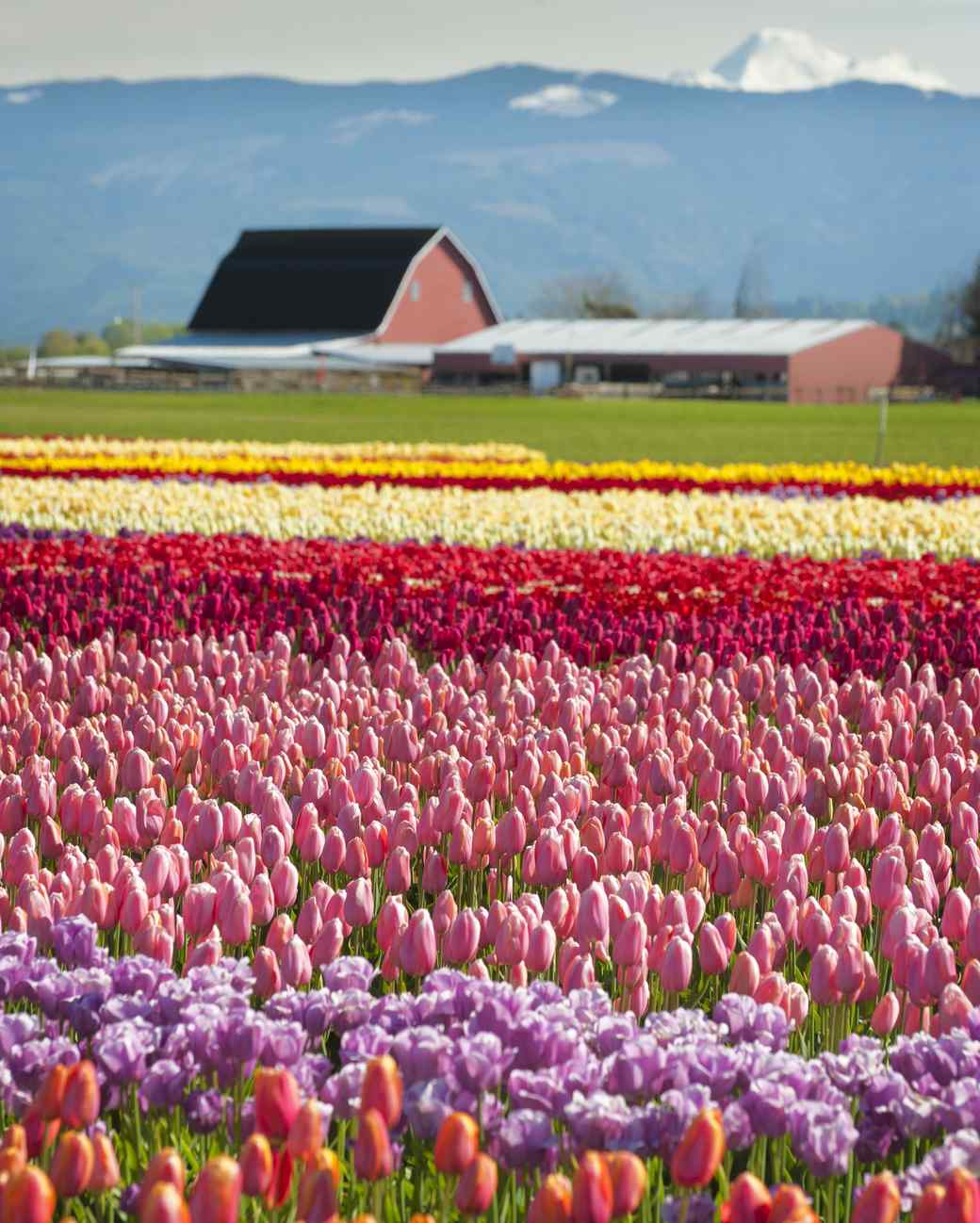 The Most Beautiful Flower Fields to Visit in the U.S.