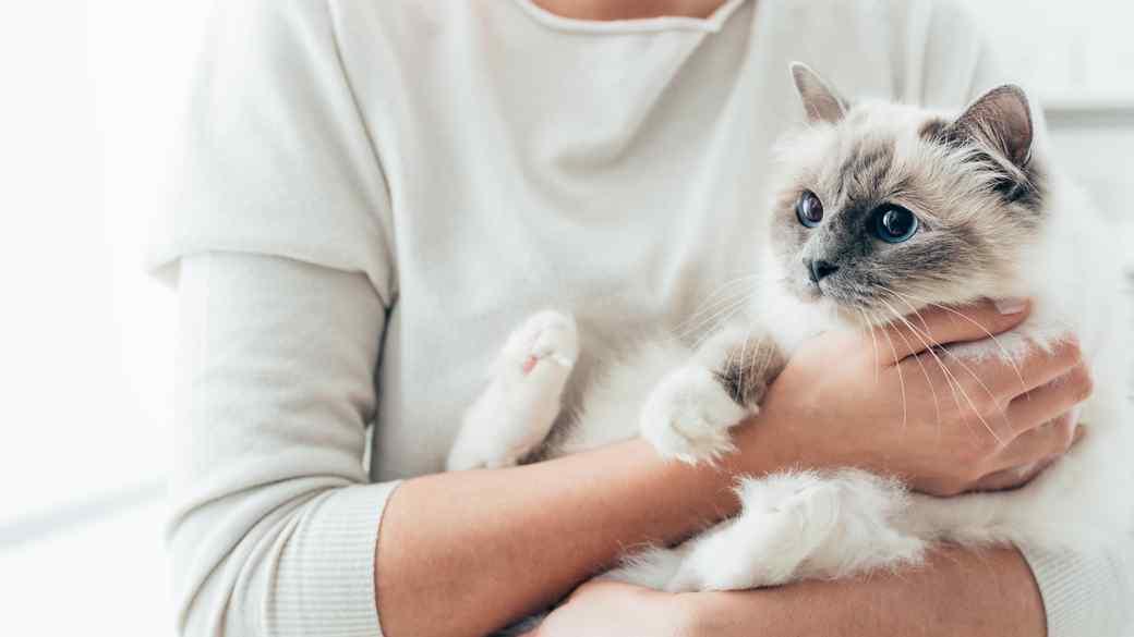 woman holding a birman cat