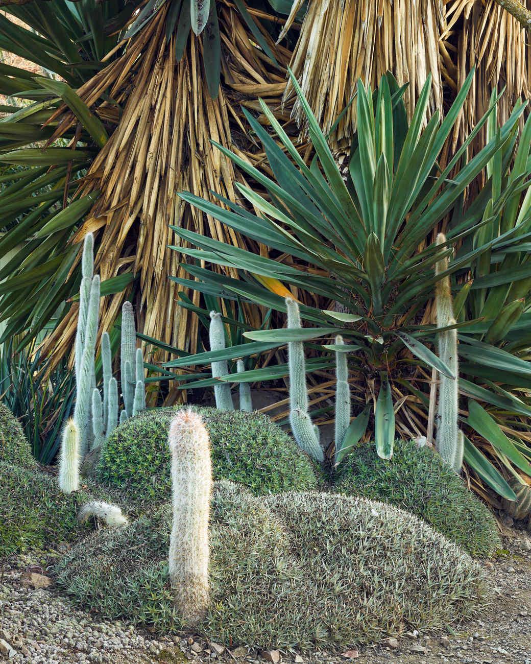 bold dry garden