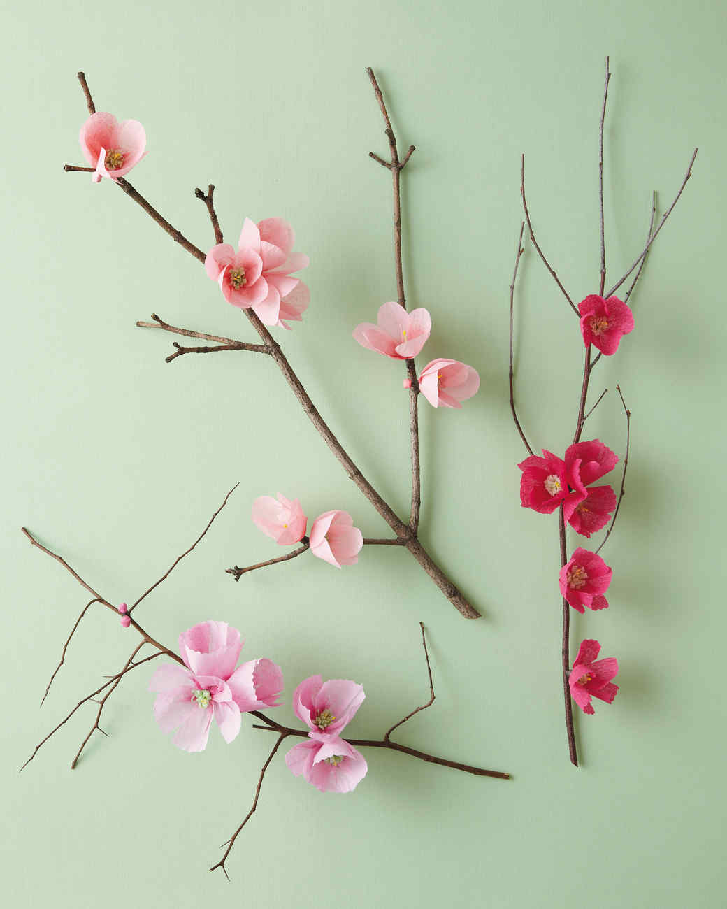 Cherry Blossom Branch