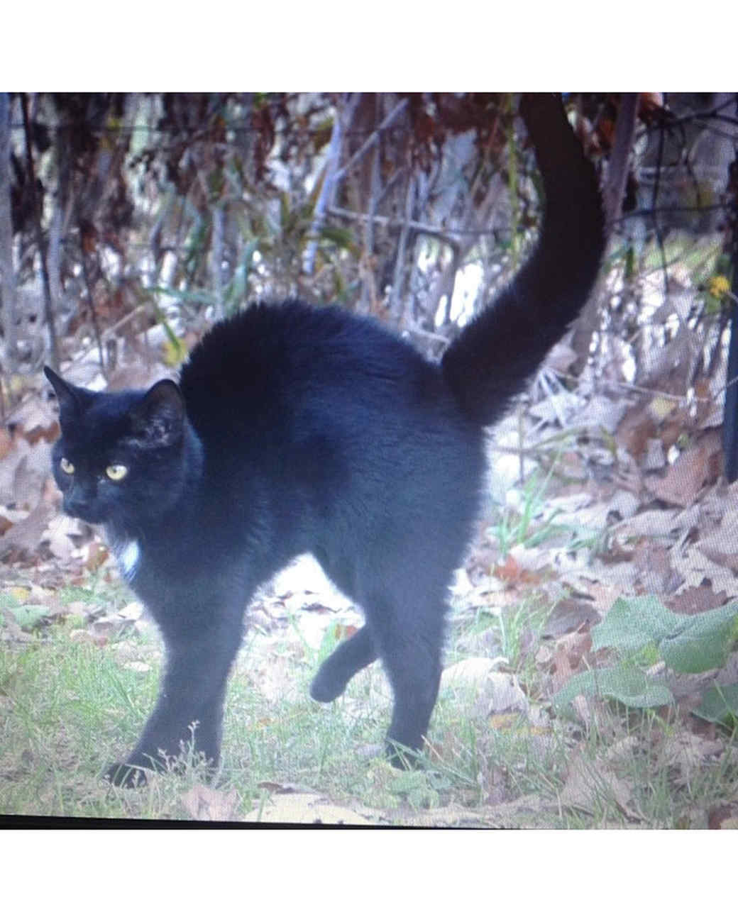 halloween-hunt-ugc-black-cat-spropes1.jpg