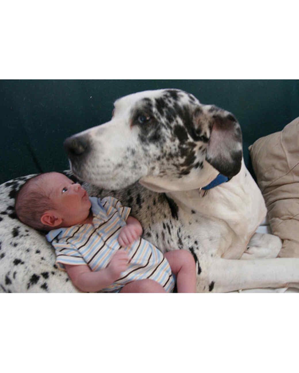 pets_adoption_6170553_122717_13817264.jpg