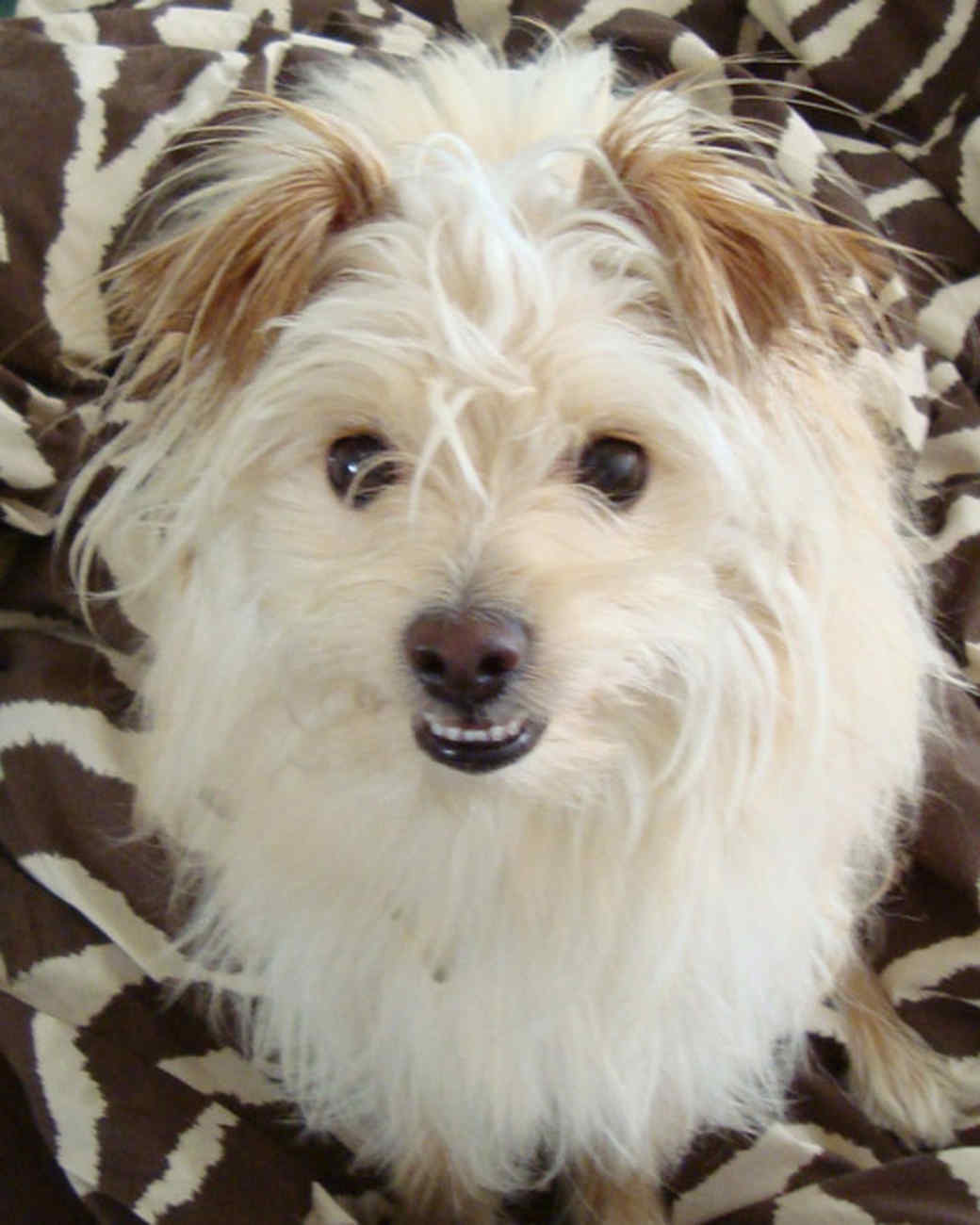 pets_adoption_6383262_122717_14090785.jpg
